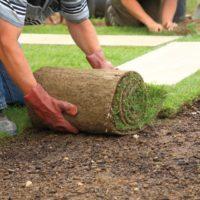 zelfstandige zzp hovenier legt tuin aan en plaatst grasmat